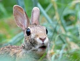 Image result for surprised rabbit