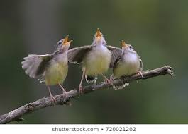 Singing Birds Images, Stock Photos & Vectors | Shutterstock