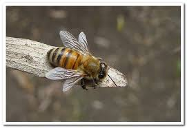 Bee Terms — B.A.S.C.